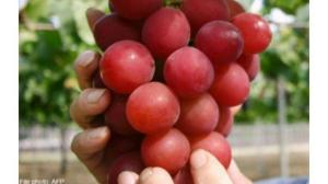 20140705_grapes_afpe