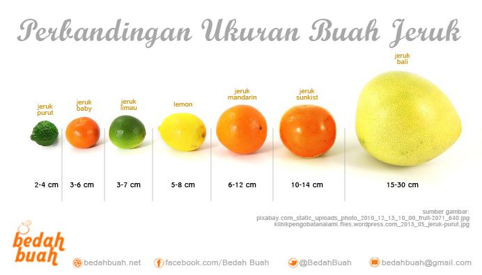 perbandingan ukuran jeruk